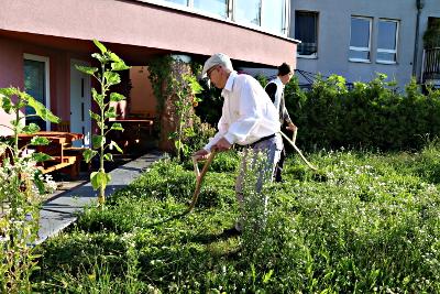Vorsichtiges Freistellen von Pflanzen mit der Sense.