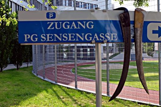 Parken für Schnitter in der Sensengasse Wien
