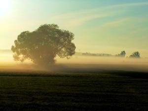 morgens mit der sense mähen an der burgstallmühle
