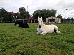 pferde der burgstallmühle, sensenkurs, schnitter