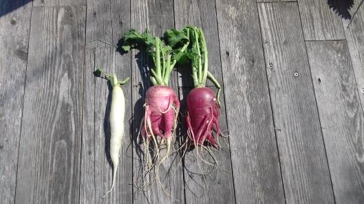 Gemüse mit Gesicht. Foto: Irmgard Kirchner