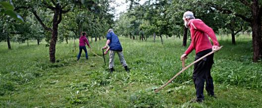 Schnitter.in im Obstgarten bei Villach
